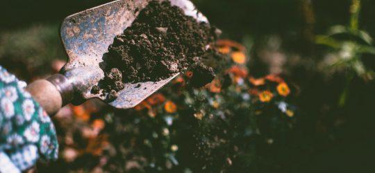 ember ás