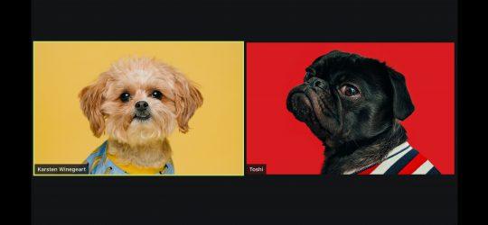 videochat kutyaképekkel